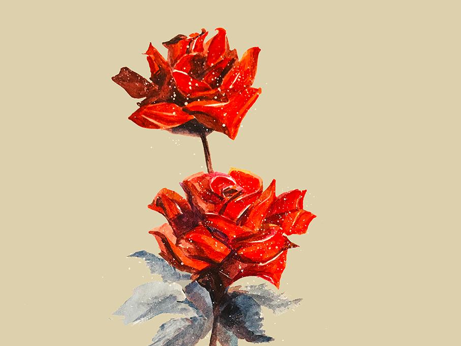 Rose rose watercolor