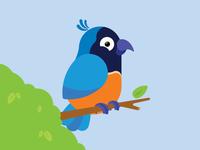 Cheeky little bird