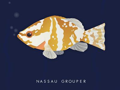Nassau Grouper fish