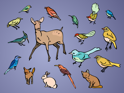Actions Speak Louder Than Birds wildlife vector rabbit fox flat deer bunny brush birds