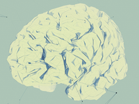 Low Poly Brain 2