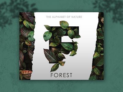 Forest Poster forest poster letter poster nature letter nature poster poster design graphic design adobephotoshop