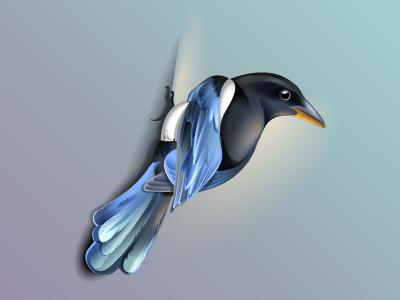 Magpie ios logo app feather illustration design icon bird magpie