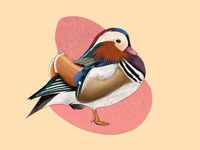Japanese duck duck illustration art illustration digital painting digital illustration design