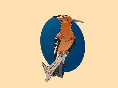 Whoopoe bird hoopoe illustration art illustration digital painting digital illustration design
