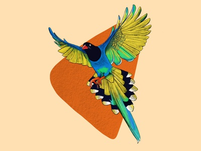 Exotic Bird in flight exotic bird illustration art illustration digital painting digital illustration design