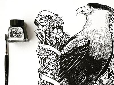 Caracara Plancus traditional illustration hand made brush ink flowers nature plants bird illustration