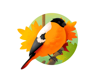 Red Songbird Bullfinch