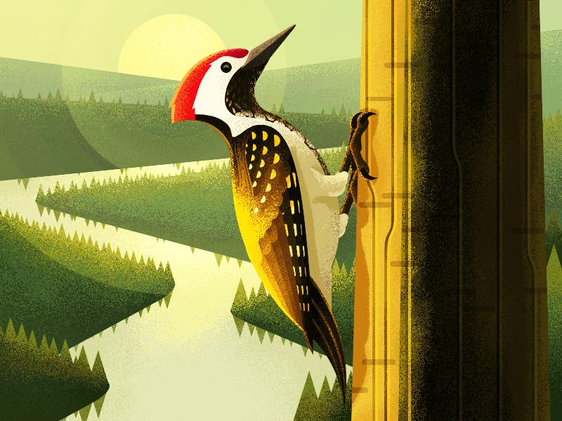 Golden-backed woodpecker illiustration ios11 iphone x illiustration woodpecker golden-backed