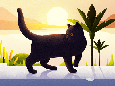 Cat that walks by the sea