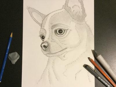 Queen Reina fine art pencil chihuahua sketch drawing dog tech pens charcoal