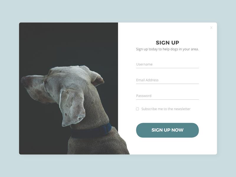Daily UI 001 - Sign Up dog form sign up web design web ux ui dailyui 001