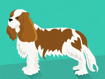 King Charles Cavalier illustration dogs kingcharlescavalier