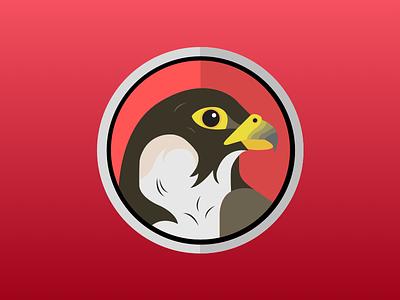 Falcon Release bird illustration falcon