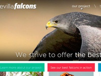 Falcons homepage