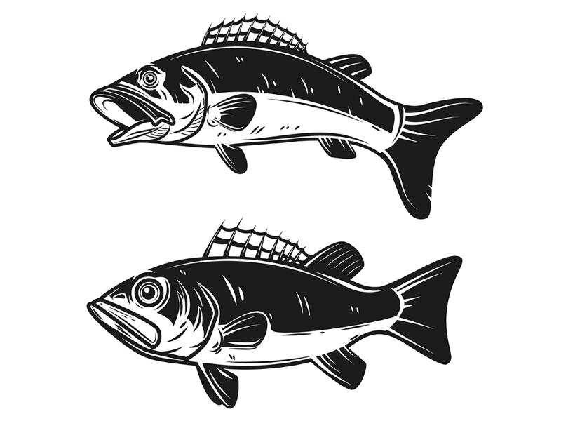 Bass fish vector fish perch logo fishing bass fish