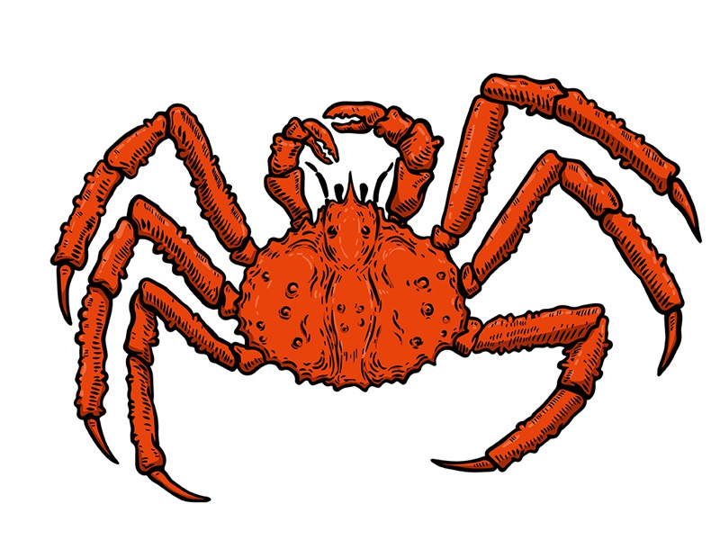 Crab logo brand mark character illustration ipad pro hand drawn marine life king crab seafood crab