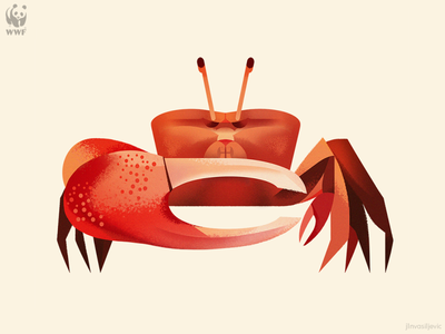 WWF Education Centre illustration, Fiddler Crab jlnvasiljevic crab fiddler crab wwf minimal animal design nature illustration