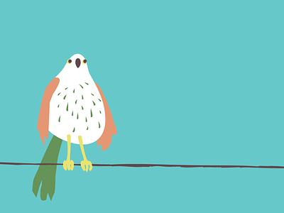 Birdy vector illustration design