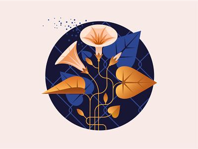 Vector flowers morning glory flowers design vector illustrator illustration