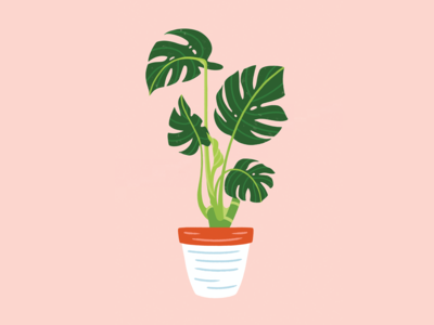 Lil' Monstera