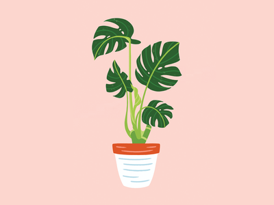 Lil' Monstera ceramic apartment monstera deliciosa foliage pot terra cotta plant monstera