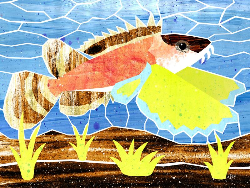 Ocellated Waspfish water oceanlife sealife ocean sea fish illustration art illustration