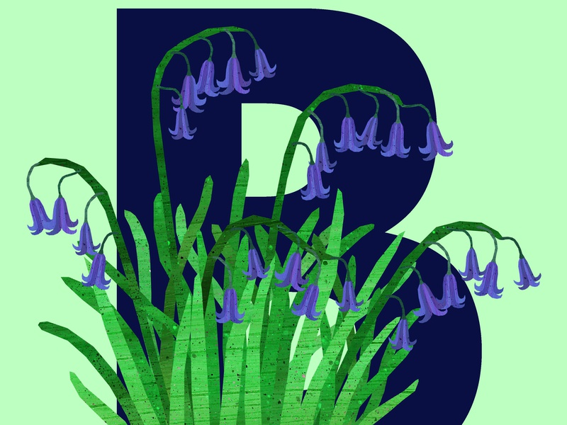 B Bluebells flowers alphabet plants bluebells illustration design illustration art illustrations illustration