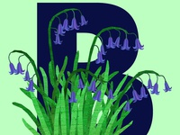 B Bluebells