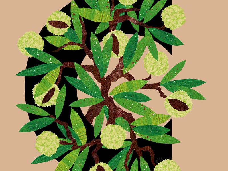 C Chestnut conkers alphabet plants trees tree chestnut illustration design illustration art illustrations illustration
