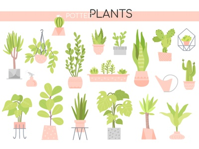 Potted Plants collection office succulents cacti flower pot garden plant potted style design