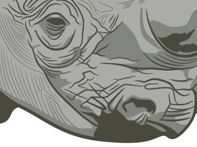 Rhinovector illustrator illustration vector rhinoceros gray