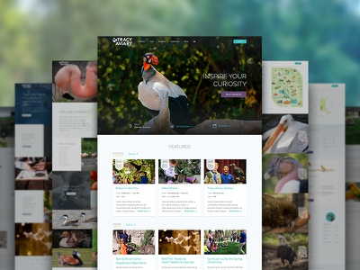 Tracy Aviary Complete Site navigation photography ui website cards birds aviary