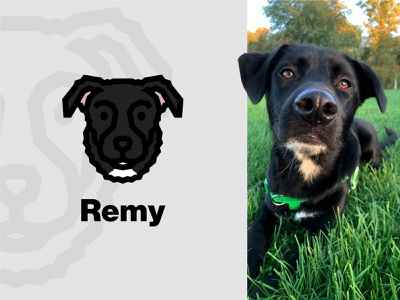 Remy 2 labrador animal logo simple dog black dog