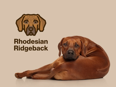 Rhodesian Ridgeback Dog Logo pet logo face design vector dog icon lion hunter hound brown rhodesian ridgeback cute illustration animal dog logo