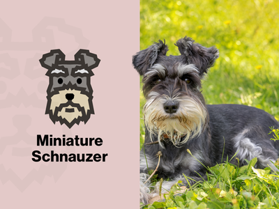 Miniature Schnauzer Dog Logo vector canine pet logo simple illustration face dog logo dog icon design cute animal