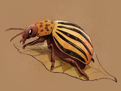 Potato Bug draw animal beetle bug digital art sketchbook sketch illustrator procreate ipad editorial graphic design drawing art illustration
