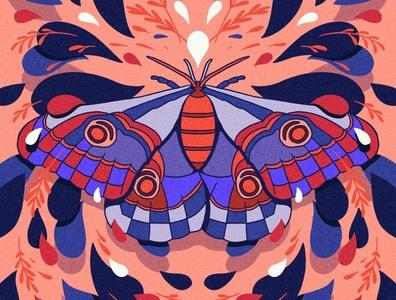Moth Symmetry