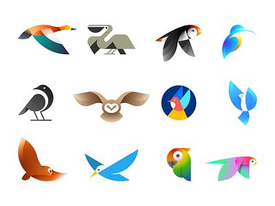 Beautiful Birds flat gradient illustration animal mark symbol logo bird crow dove parrot owl kingfisher puffin pelican duck shelduck