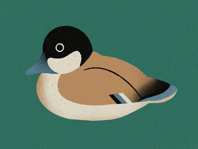 Ducky ipad procreate woodland nature texture illustration duck