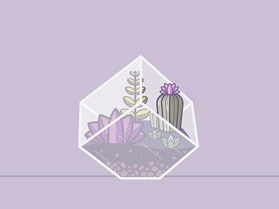 Terrarium   Cube sedums succulent terrarium