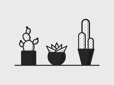 Pricks   pt. 1 succulents plants geometric simple desert cacti cactus