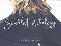 Scarlet Whaleys script font.