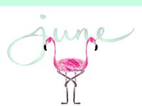 June Flamingo