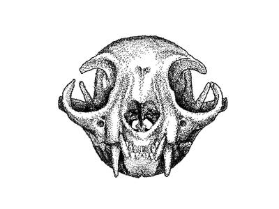 Cat Skull Drawing