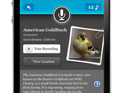 Pipio Bird Profile iphone bird audio recording