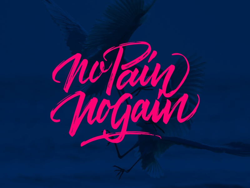 No Pain No Gain for sale tshirt design typography brushpen lettering