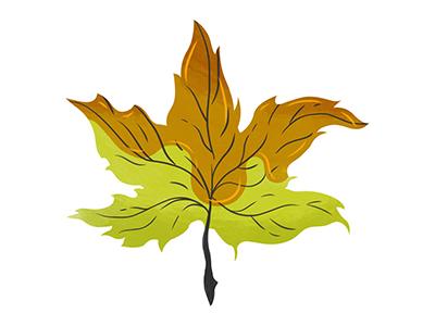 Maple Leaf syrup plants nature leaf maple leaf