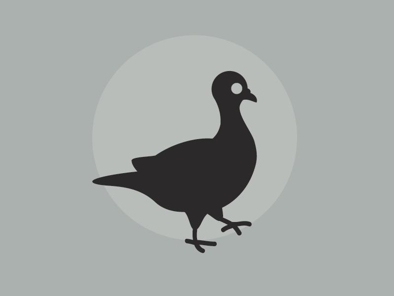Pigeon mark illustrator logo bird pigeon