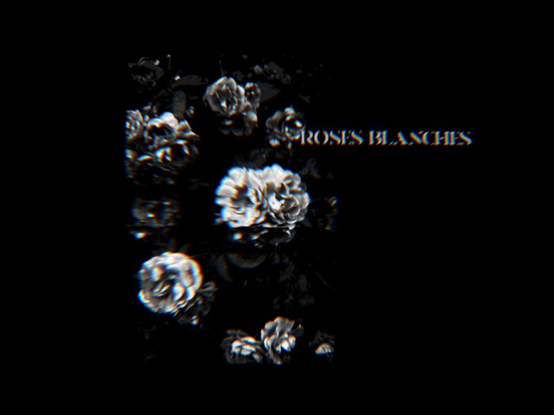 ROSES BLANCHES x LACHUTE blackandwhite photomosh photoshop art direction artwork art roses flower glitch album cover design album cover album artwork album art album abstract illustration design lachute